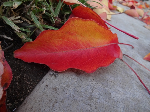 beautiful fall distraction